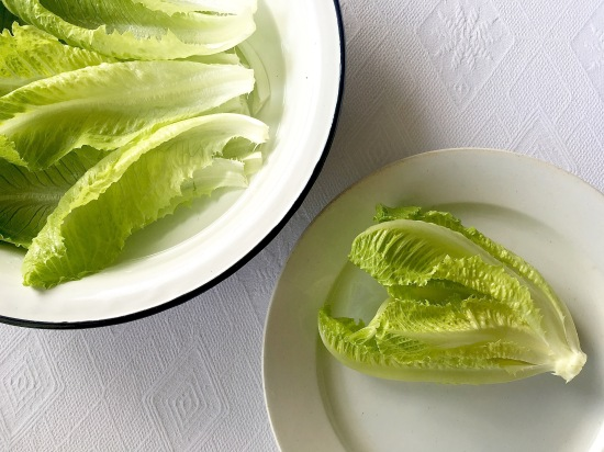 Lettuce leaves close-up
